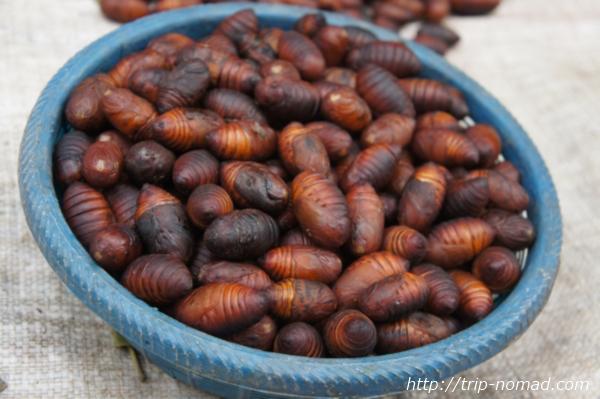 『ルアンパバーン朝市』赤い芋虫画像