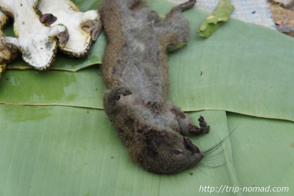 『ルアンパバーン朝市』山に住む動物画像