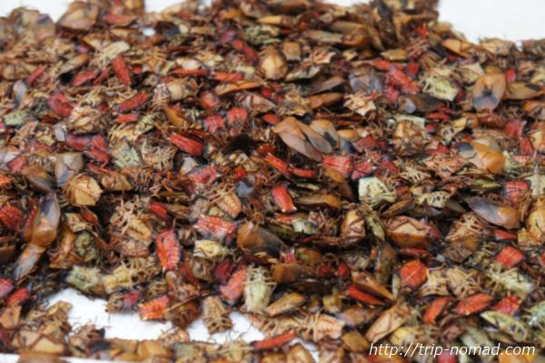 『ルアンパバーン朝市』赤いカメムシ画像