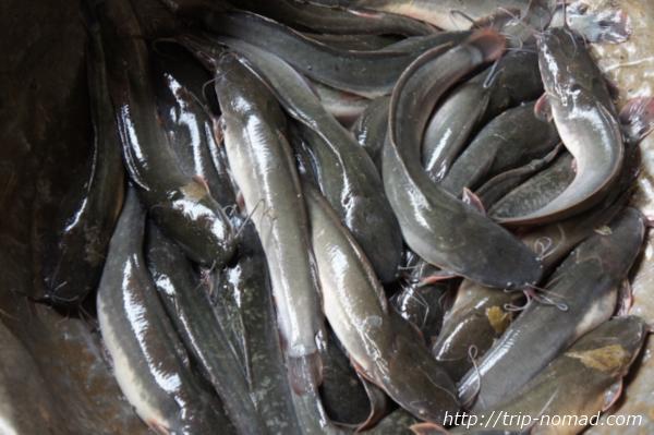 『タラートポーシー市場』ヌルヌルのナマズ画像