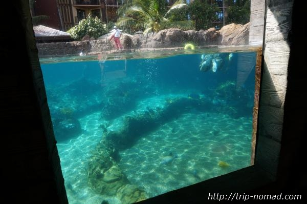 『アウラニ・ディズニー・リゾート&スパ』熱帯魚と泳げるプール画像