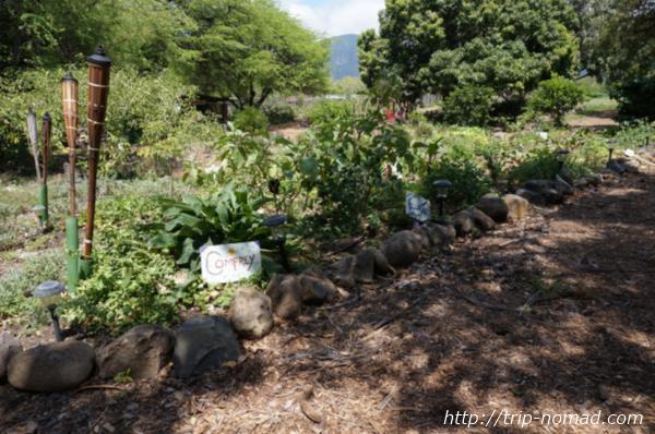 『カフマナ・オーガニック・ファーム&カフェ』畑画像