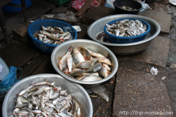 『タラート・サオ市場』フレッシュな魚画像