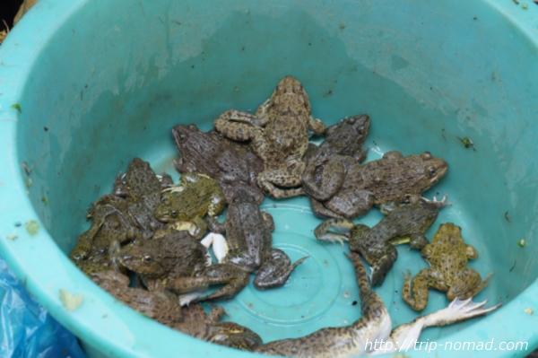 『タラート・サオ市場』カエル画像