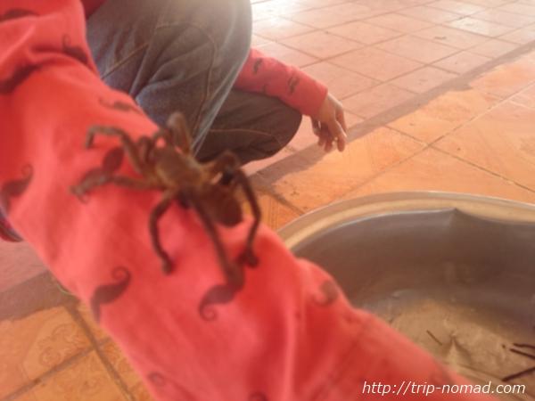 カンボジア『虫料理』タランチュラ画像