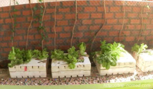 カンボジア『CAFE HOC』画像