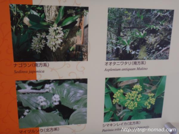 御蔵島『御蔵島観光資料館』画像