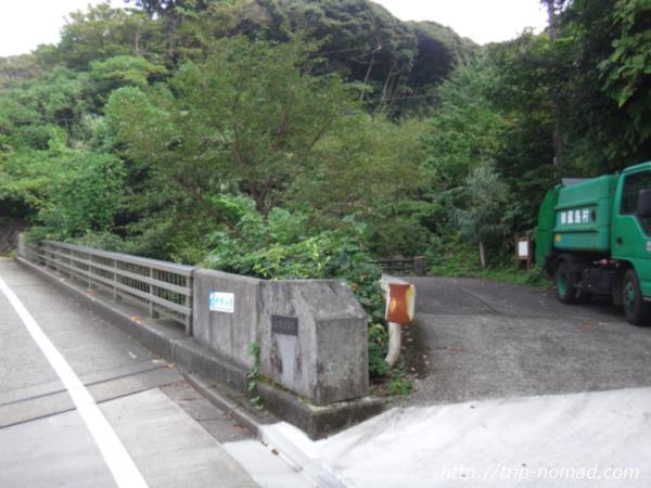 御蔵島『タンテイロの森』画像