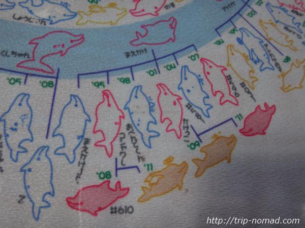 御蔵島『イルカウォッチング&ドルフィンスイム』イルカの家系図画像