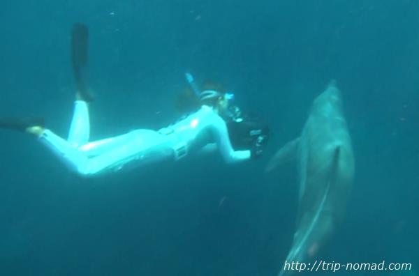 御蔵島『まるごと御蔵島ツアー』橋本珠美さん水中撮影風景画像