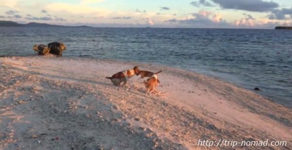 『ジープ島』画像