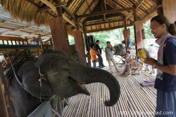 『ルアンパバーン象乗り』画像