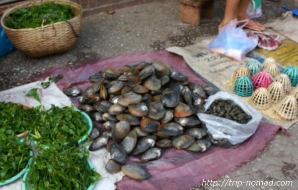 ラオス『ルアンパバーン』食材貝画像