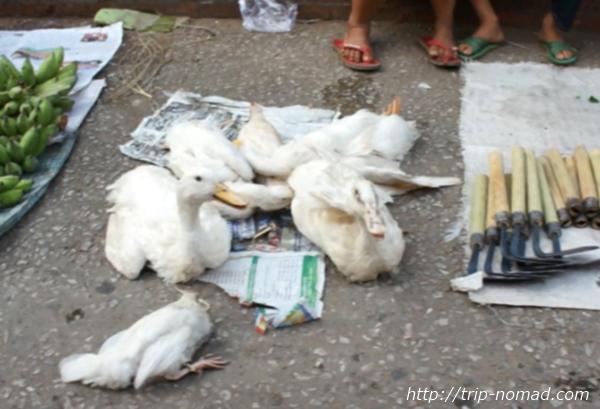 ラオス『ルアンパバーン』食材鳥画像