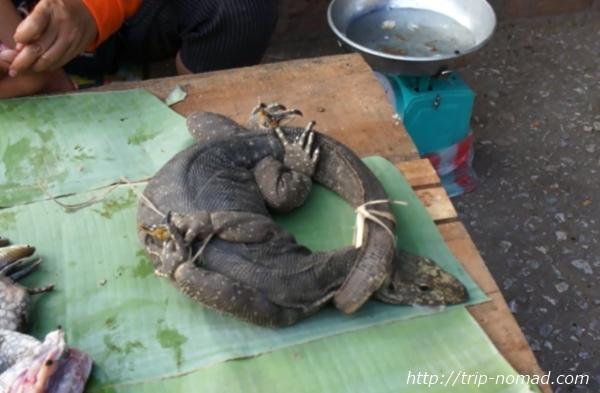 ラオス『ルアンパバーン』食材巨大トカゲ画像