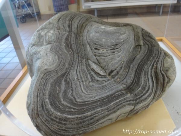 「沼島ターミナルセンター」「さや状褶曲」の岩画像