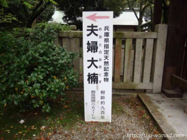 『伊弉諾神宮』夫婦大楠画像
