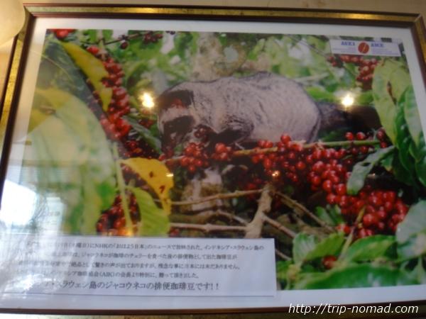 『喫茶ツヅキ』コピ・ルアクポスター画像