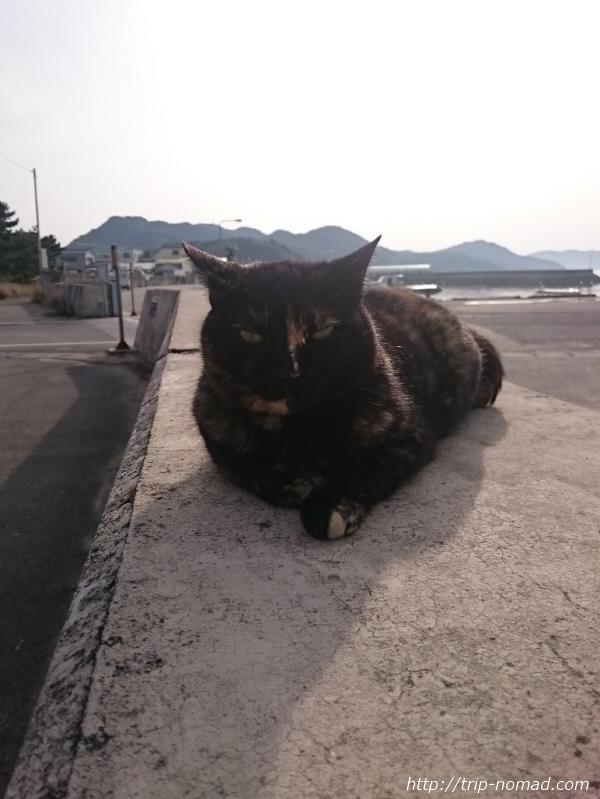 豊島の猫画像