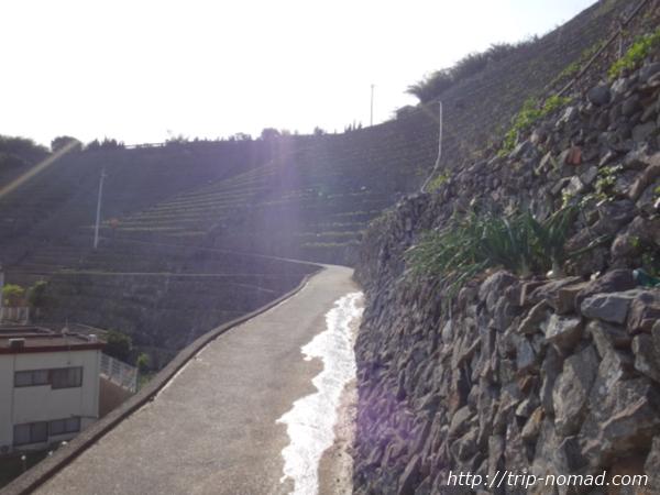 『遊子水荷浦の段畑』斜面アップ画像