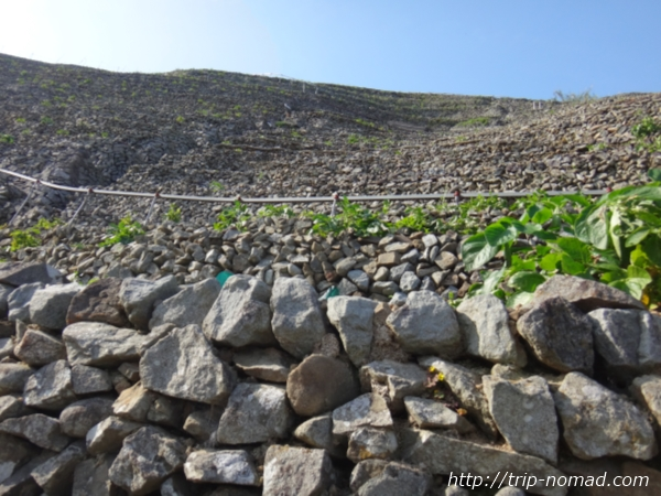 『遊子水荷浦の段畑』石垣アップ画像