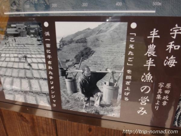 『遊子水荷浦の段畑』画像