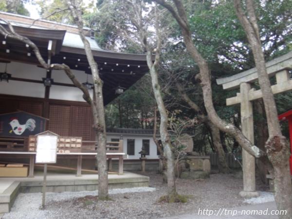 『保久良神社』境内にある木