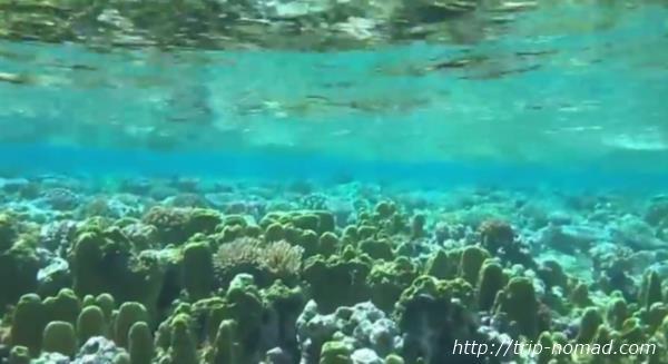 ジープ島に行くなら絶対に【キミシマ環礁】に行くべし!