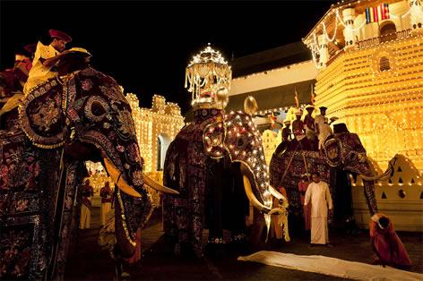 【H.I.S】スリランカ最大!きらびやかに飾られた象たちのパレード『ペラヘラ祭り』