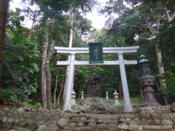 『御蔵島村』が5分でわかる!【半日観光!らくらくお里散策コース編】