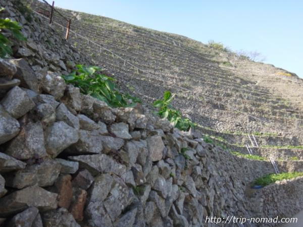 【宇和島】絶景!『遊子水荷浦の段畑』は空へ駆け上がる階段のようだった!